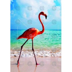 Picture Flamingo 023
