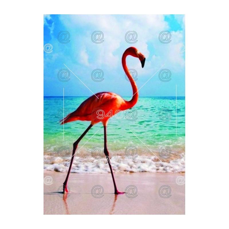 Flamingos 001