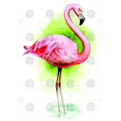 Picture Flamingo 022