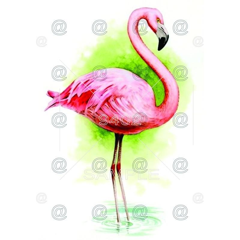Flamingos 022