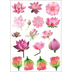 Cvetovi Razno 118