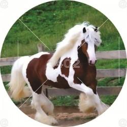 JS 083 Životinje (6) Konj