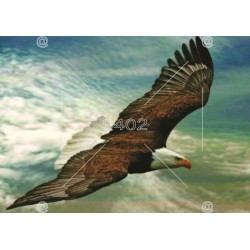 Picture Birds 004